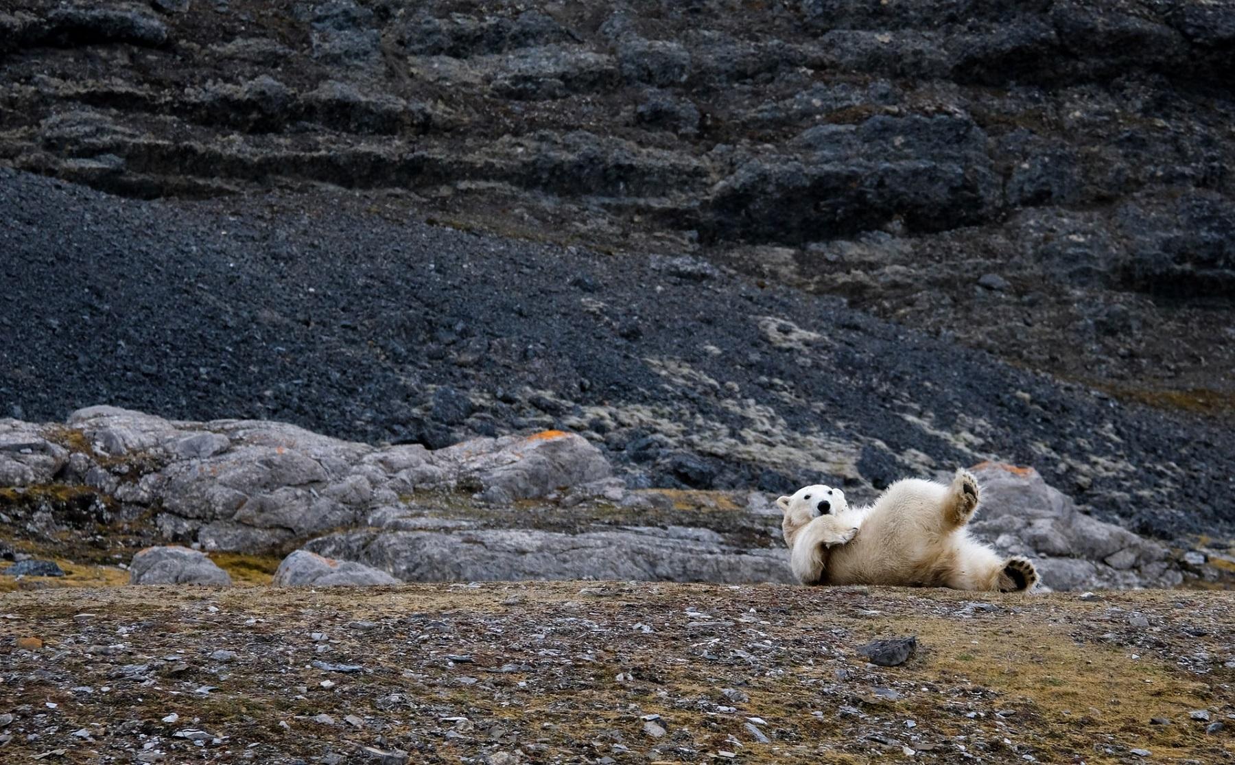Spitsbergen lipiec