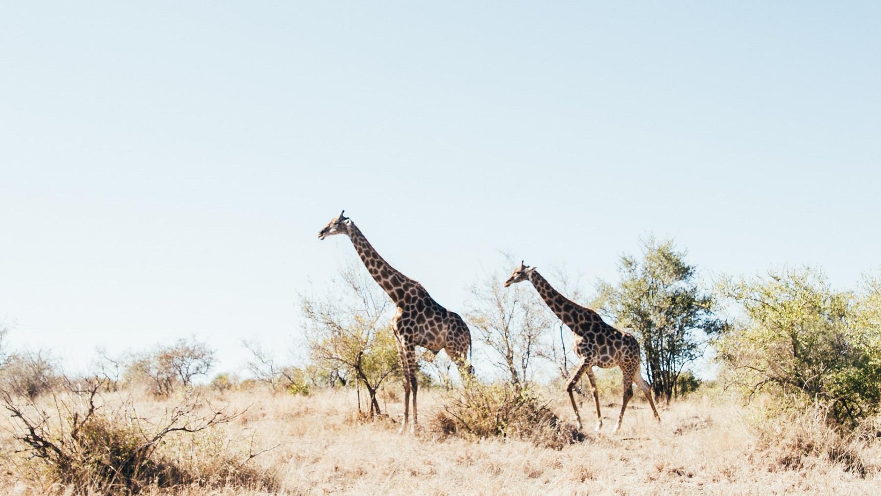 RPA wrzesień