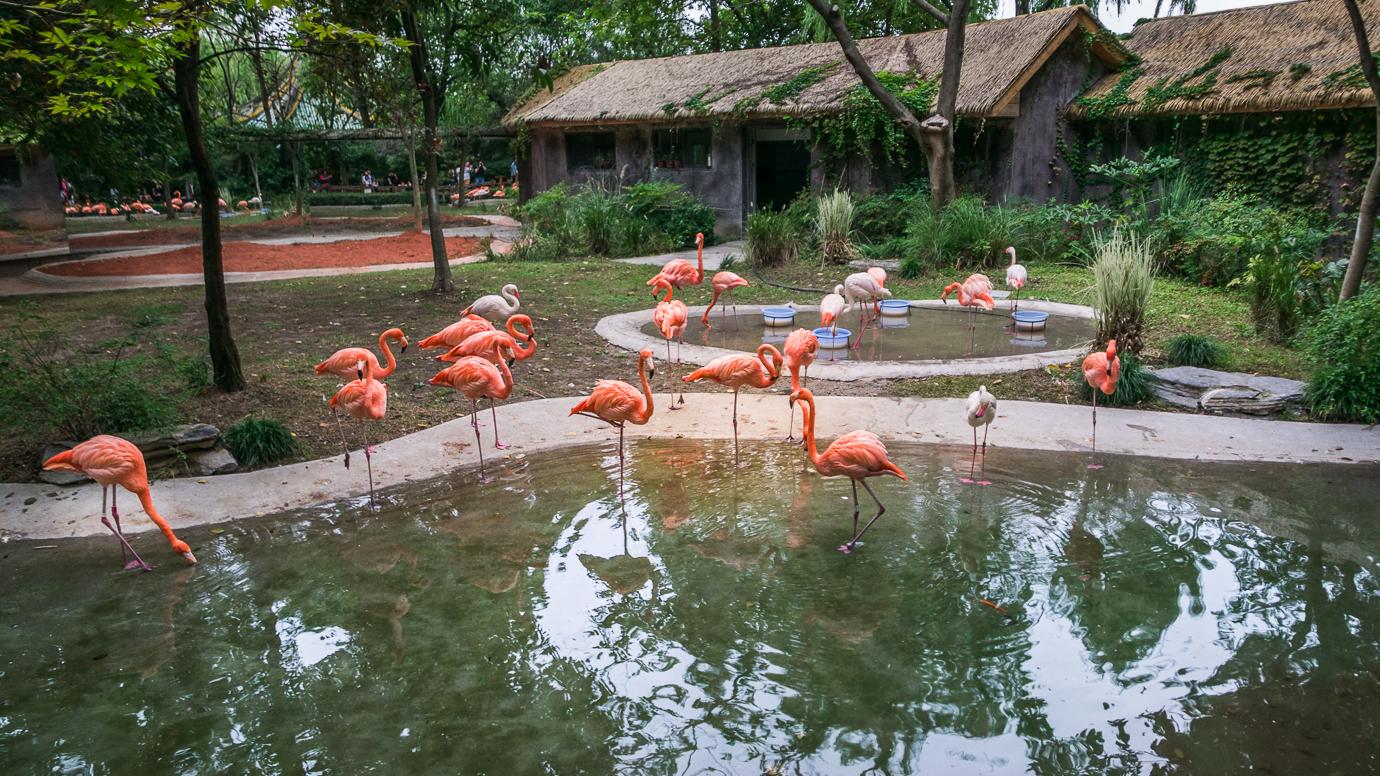 Szanghaj zoo flamingi